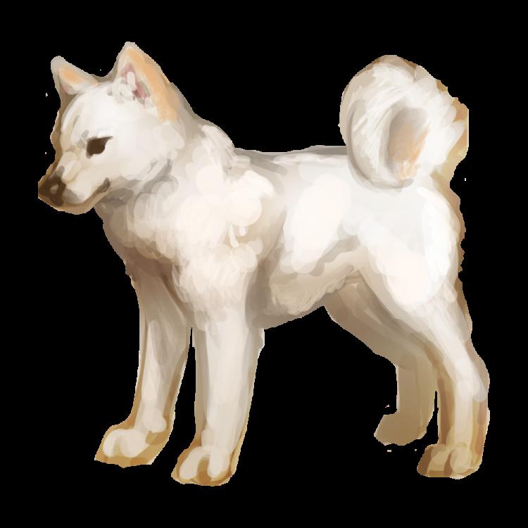 ソフトバンクのCMで有名な北海道犬